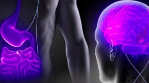 Maladies psychiatriques : quel rôle pour l'intestin ?