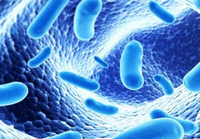 Antibiotiques et maladies intestinales : les probiotiques sont-ils nécessaires ?