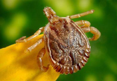 Dossier : Lyme, la maladie qui fait transpirer la médecine