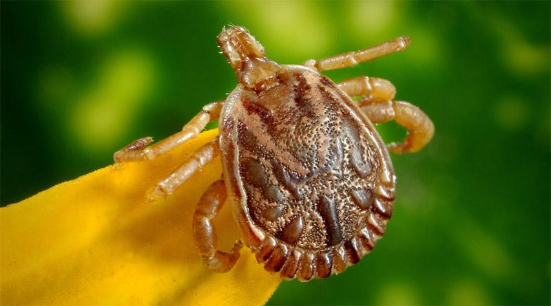 Dossier maladie de Lyme dans Alternative Santé, par Dimitri Jacques